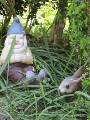 Dismal Gnome