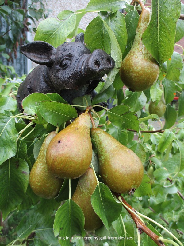 pig in a pear tree