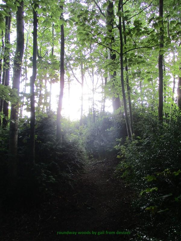 roundway woods